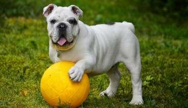 Quelle balle choisir pour son chien? 1