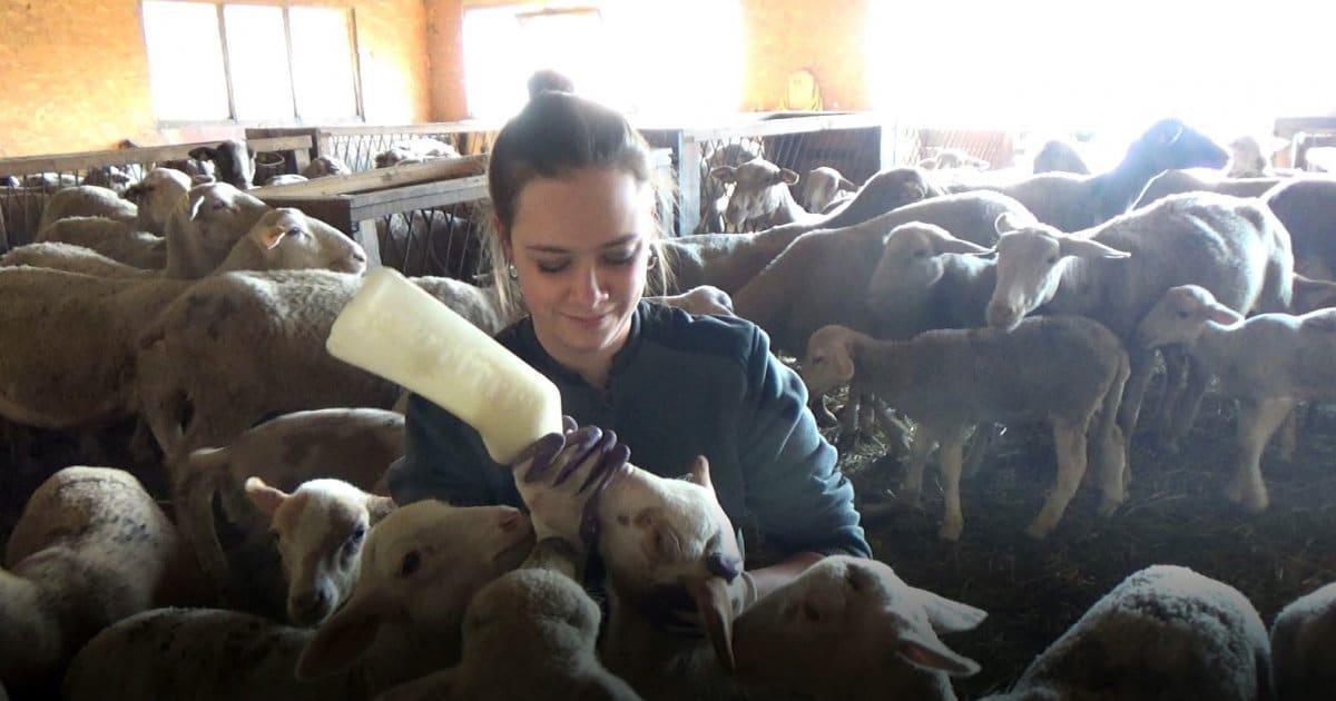 Ne nous laissons pas abattre ! Deux tout jeunes agriculteurs passionnés par leur métier dans la vallée de Serre Chevalier - www.dici.fr 1