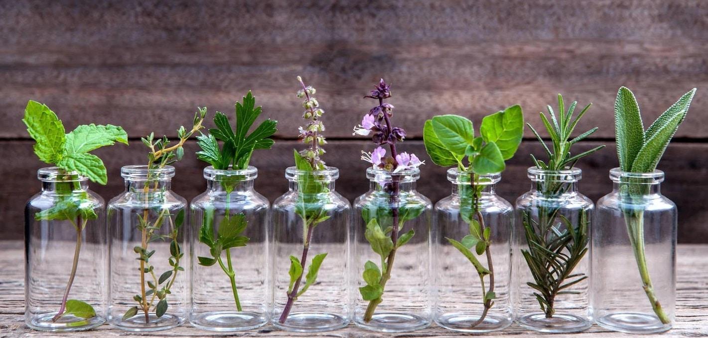 5 plantes médicinales faciles à cultiver dans son jardin 1