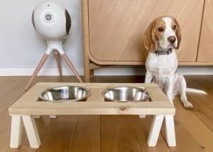 DIY: faire du bricolage pour vos animaux
