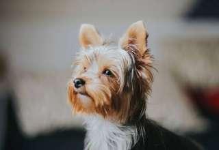 Quel prix pour une mutuelle animaux Mutuelle pour chien qui rembourse nexguard 1