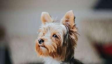 Quel prix pour une mutuelle animaux Mutuelle pour chien qui rembourse nexguard 10