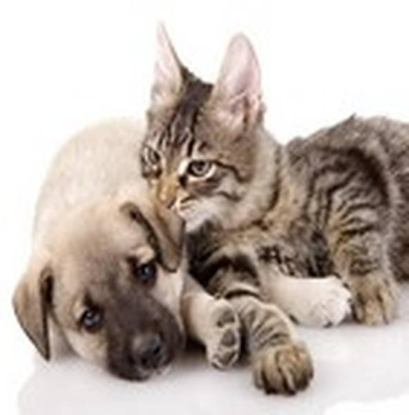Delai pouer une assurance pour animaux