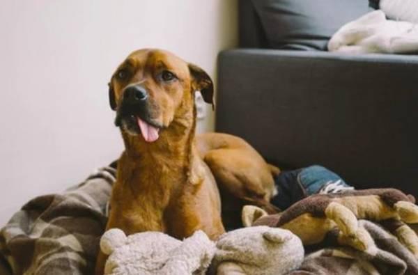 --> Spécials Vacances ! Mutuelle prenant la dysplasie pour chien 8