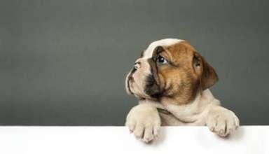 Credit mutuel assurance pour chien 3