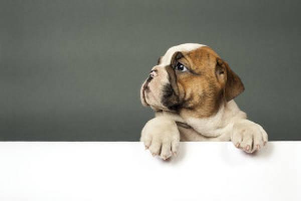 Credit mutuel assurance pour chien 14