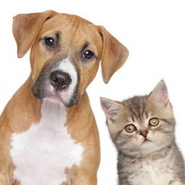 Assurances mutuelles pour chien rema