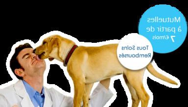 Quelle mutuelle animaux Mutuelle pour chien solly azar 3